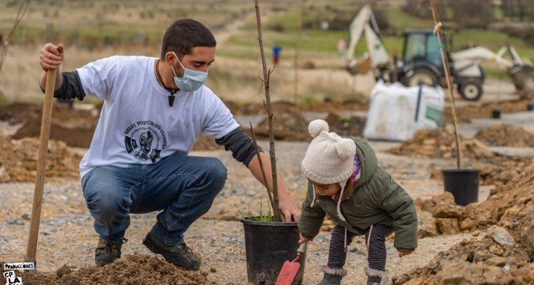 Niña pequeña plantando un árbol en Trescasas.